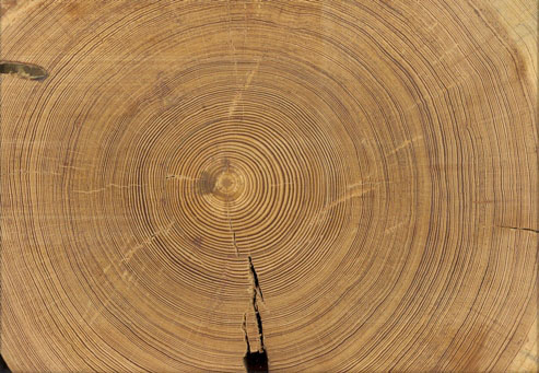 02_Endgrain - Reclaimed Long Leaf Pine
