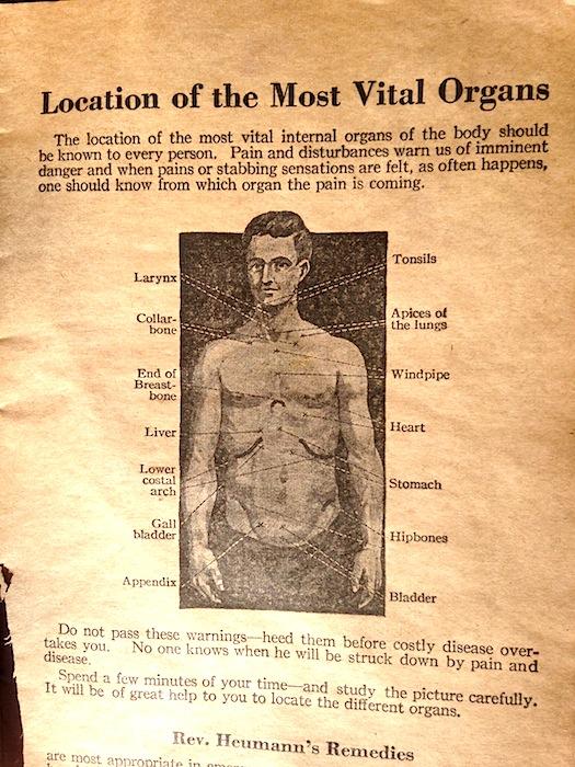 vital organs
